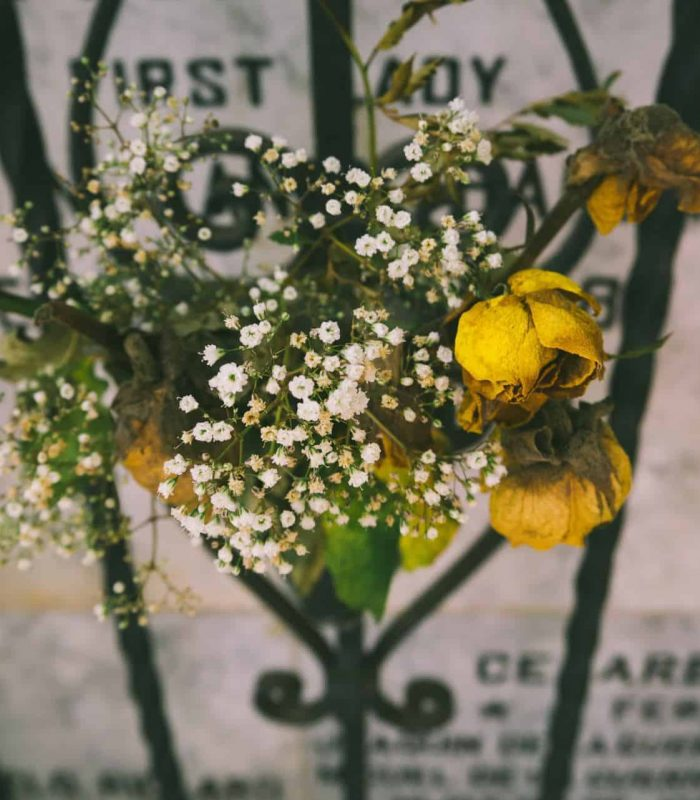 Yellow flowers in front of a grave stone